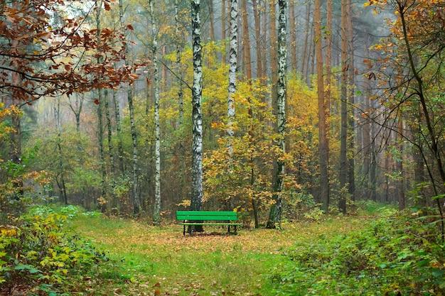 Ławka w jesiennym lesie