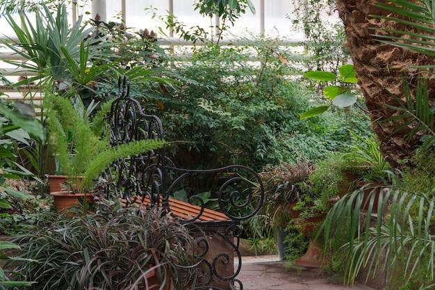 Ławka w szklarni botanicznej. tropikalna oranżeria dekoracyjna