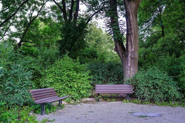 Ławki do siedzenia w publicznym parku pełnym zieleni.