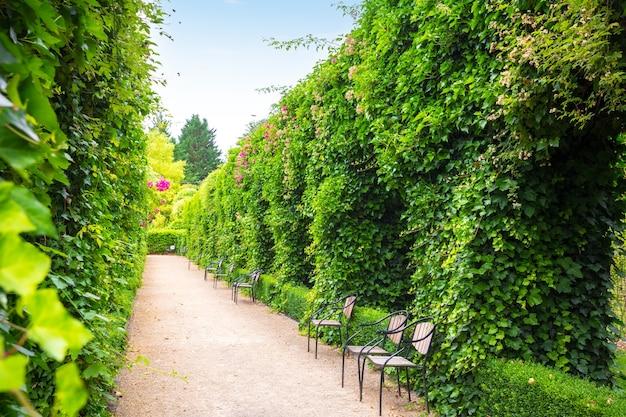 Ławki między przyciętymi krzewami, letni park w europie. profesjonalne ogrodnictwo, europejski zielony krajobraz, dekoracja roślin ogrodowych