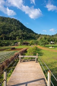 Ławki z widokiem na góry na farmie w rai napa - phupha, chiang mai, tajlandia.
