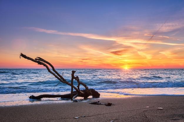 Ld pień drewna zaczepia się w wodzie na plaży na piękny zachód słońca
