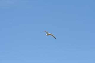 Lecącego ptaka, niebo
