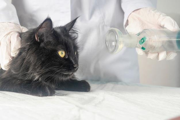 Leczenie kota z astmą za pomocą inhalatora.