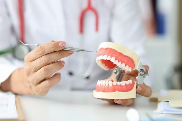 Lekarz dentysta ma sztuczną ludzką szczękę i zapalenie korzenia zęba instrumentu lub