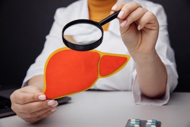 Lekarz ogląda na modelu wątroby przez lupę. wczesna diagnoza i koncepcja leczenia.