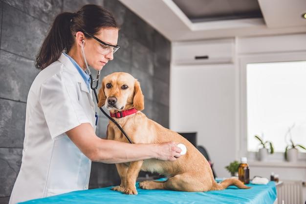 Lekarz weterynarii bada psa