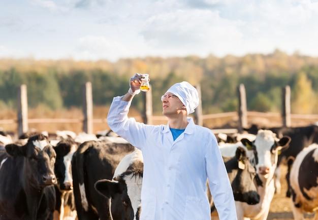 Lekarz weterynarii badający próbki biologiczne u krów hodowlanych