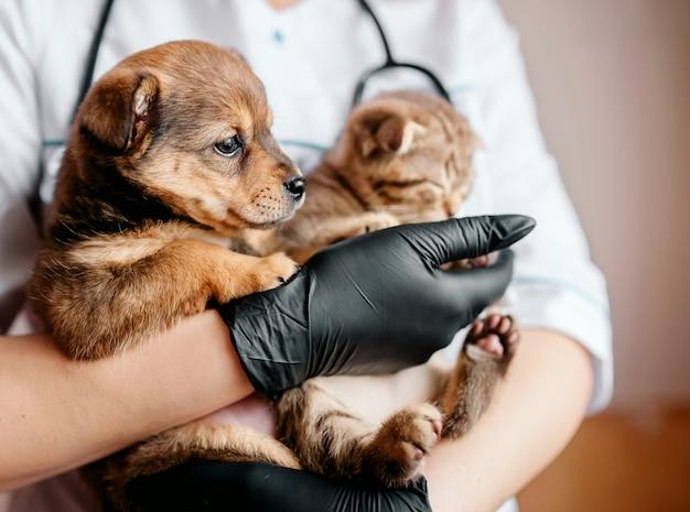Lekarz weterynarii w czarnych rękawiczkach z psem i kotem w rękach
