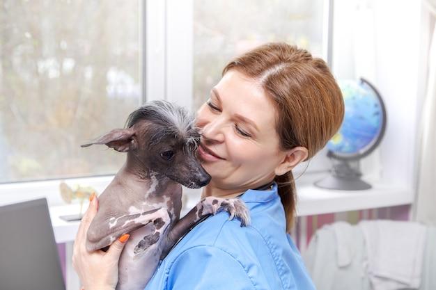 Lekarz weterynarii w średnim wieku bada psa. gabinet lekarza. . gabinet lekarza.