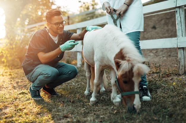 Lekarze weterynarii płci męskiej i żeńskiej wstrzykują koniowi kucyk.