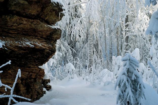 Lekki zimowy las pokryty śniegiem u podnóża stromej skały ze zwietrzałego piaskowca