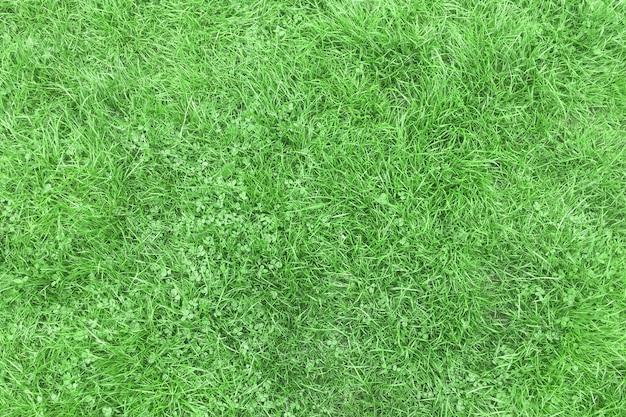 Lekko zgnieciony zielona trawa po deszczu na tle