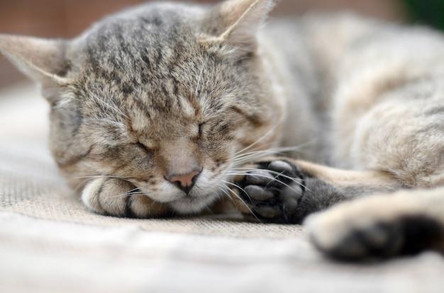 Leniwy pręgowany kot drzemiący na kanapie