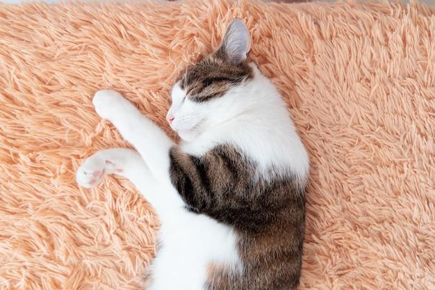 Leniwy szary kot w paski z długim wąsem śpi na kanapie.