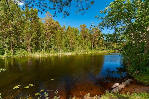 Leśna rzeka na tle zielonych sosen i błękitnego nieba