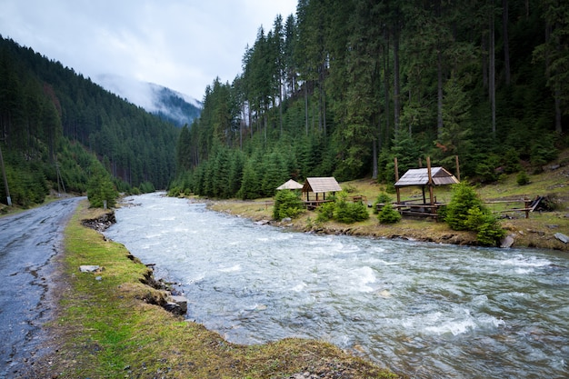 Leśna rzeka z aktywnym przepływem wody