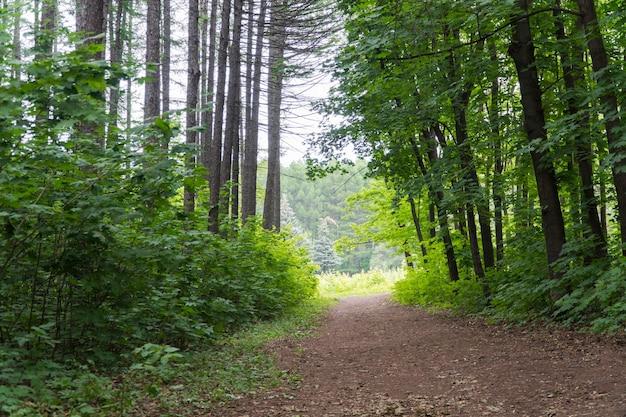 Leśna ścieżka i korony drzew w lesie