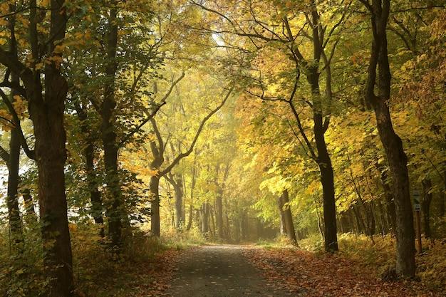 Leśna ścieżka wśród dębów w mglisty jesienny poranek