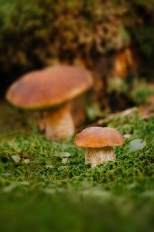 Leśne krajobrazy koncepcja grzybobrania ekoturystyki
