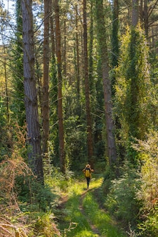 Leśne sosny i młoda kobieta pod spodem patrząca w górę