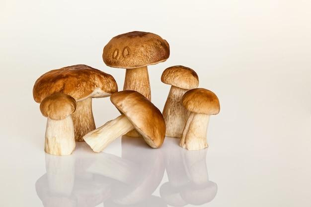 Leśny biały grzyb na białym tle. jesień to czas zbierania grzybów leśnych. świeże grzyby na stole