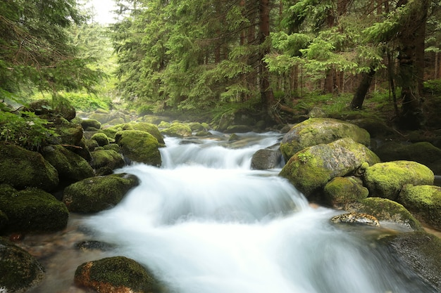 Leśny strumień spływający z gór