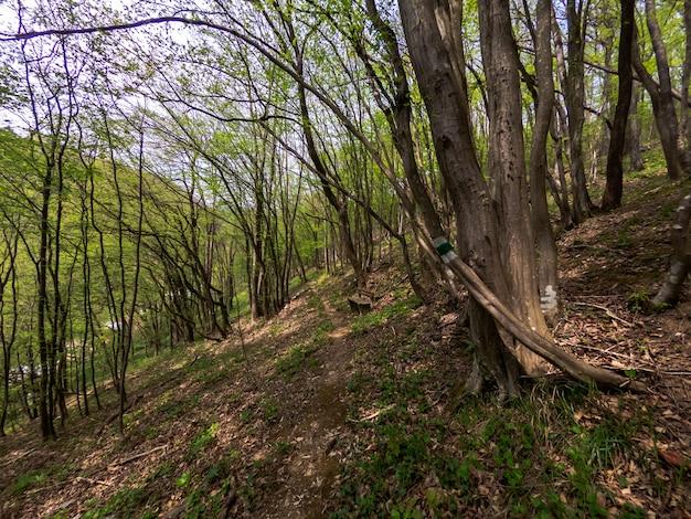 Leśny szlak turystyczny na piesze wędrówki