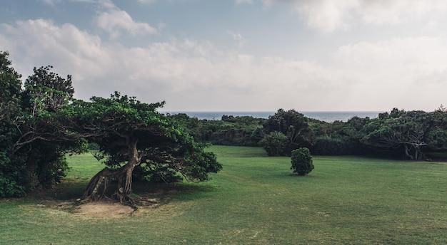Letni dzień z błękitnym niebem, drzewami i trawą