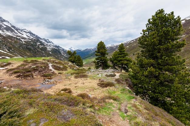 Letni krajobraz górski alp z łąką i sosną (przełęcz fluela, szwajcaria)