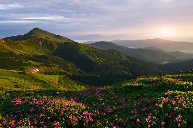 Letni krajobraz. majestatyczne karpaty. widok zapierający dech w piersiach.