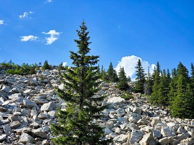 Letni krajobraz na choinkach na kamienistych górach