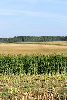 Letni krajobraz na polu uprawnym