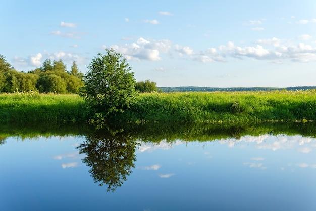 Letni krajobraz spokojnego starorzecza na równinie zalewowej z trawiastymi brzegami