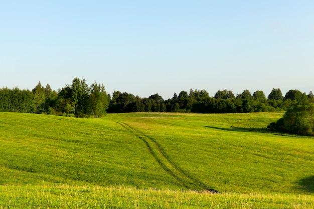 Letni krajobraz z drogą wśród wzgórz z zieloną trawą, piękna europejska przyroda z błękitnym niebem