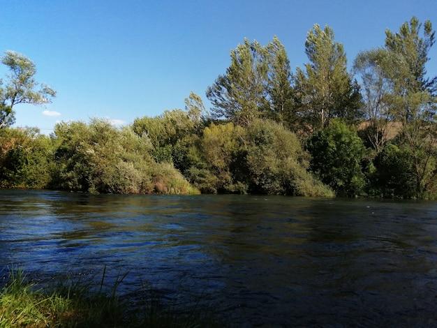 Letni krajobraz z drzewami na rzece esla