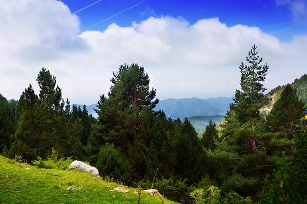 Letni krajobraz z górzystym lasem