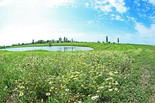 Letni krajobraz z jeziorem