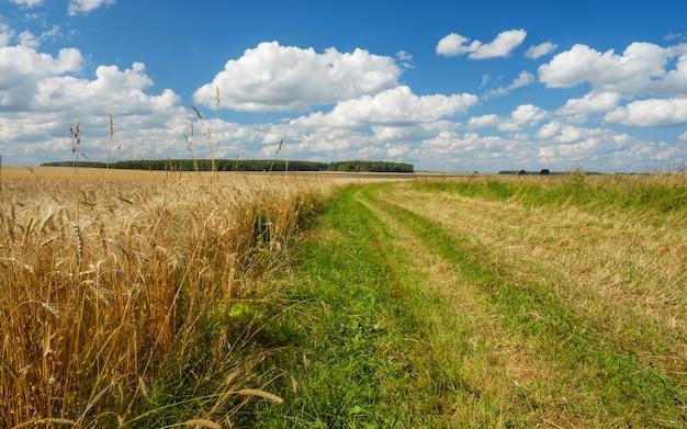 Letni krajobraz z polem pszenicy złotej, drogą, lasami i białymi chmurami