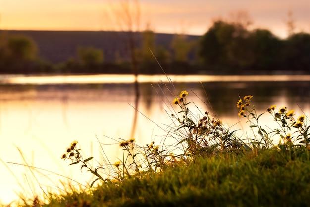Letni krajobraz z rzeką podczas zachodu słońca w złotych odcieniach