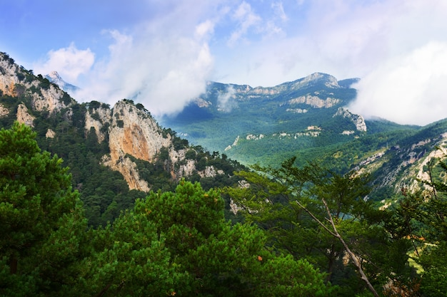 Letni krajobraz z skalistych i sosnowych drzew