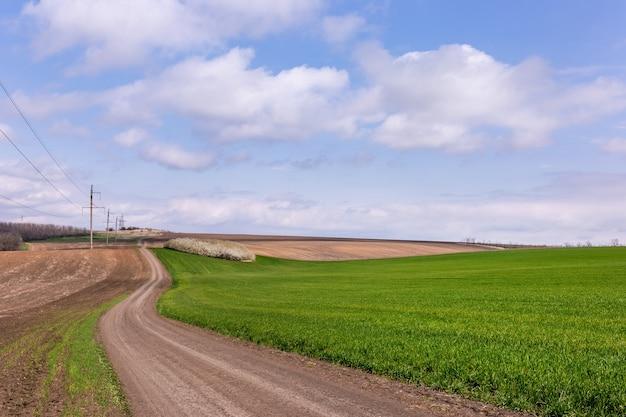 Letni krajobraz z zielonym polem pszenicy, starą drogą i chmurami