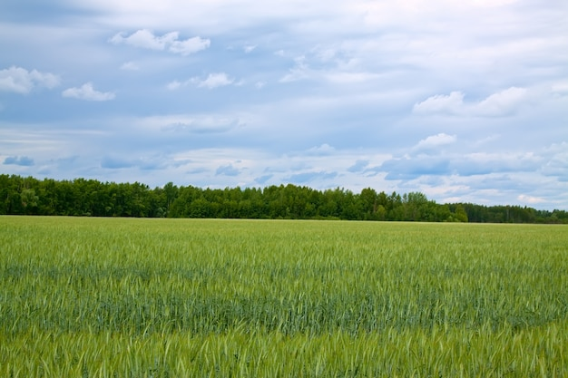 Letni krajobraz z zielonym polu