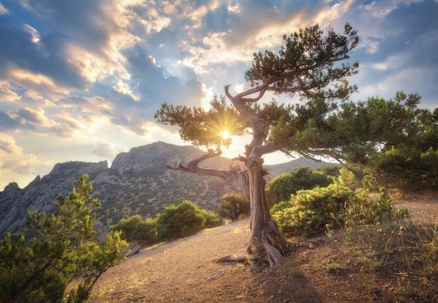 Letni krajobraz ze starym drzewem