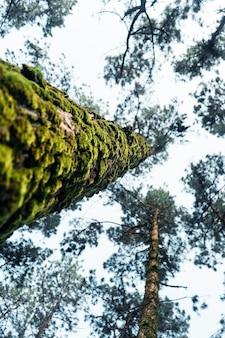 Letni las i droga do lasu, mech na drzewie