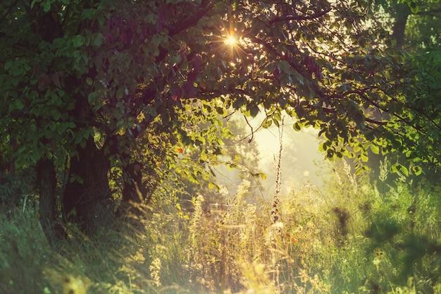 Letni las w czasie wschodu słońca. inspirujące letnie tło.