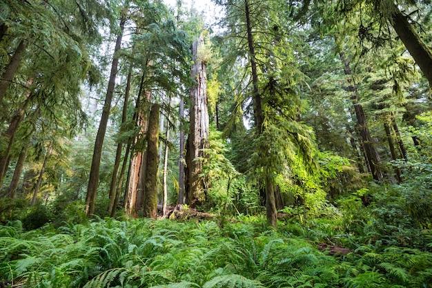 Letni las w czasie wschodu słońca.