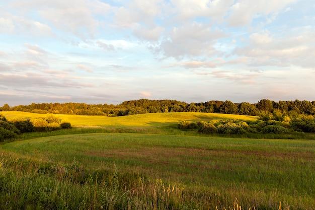 Letni lub wiosenny krajobraz w różnych roślinach zielonych
