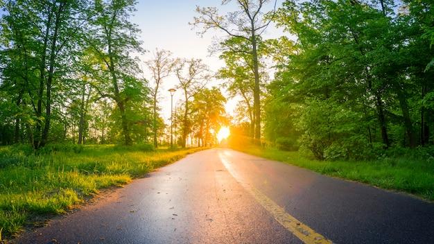Letni magiczny jasny poranek w zielonym parku. młoda bujna trawa i ciepłe promienie słońca tworzą cudowną atmosferę.
