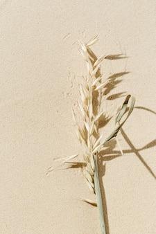 Letni minimalny baner z cieniem suchej trawy na naturalnym tle piasku